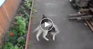 cachorro gato