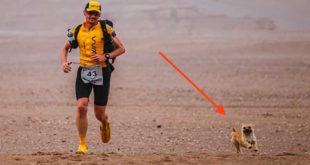 cao-corre-maratona